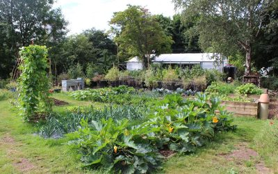 Regenerative agriculture or GMOs: A Letter to MPs
