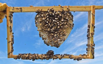 Bee Workers for Key Workers