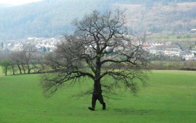 Introducing: The Wirral Tree Wardens